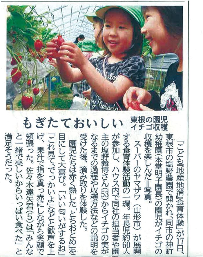もぎたておいしい、東根の園児イチゴ収穫!:画像
