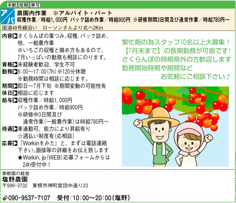 【アルバイト募集】さくらんぼ&いちご農作業_2020年:画像