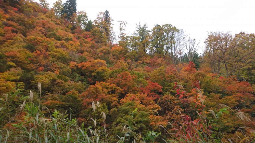 紅葉も絶景スポット