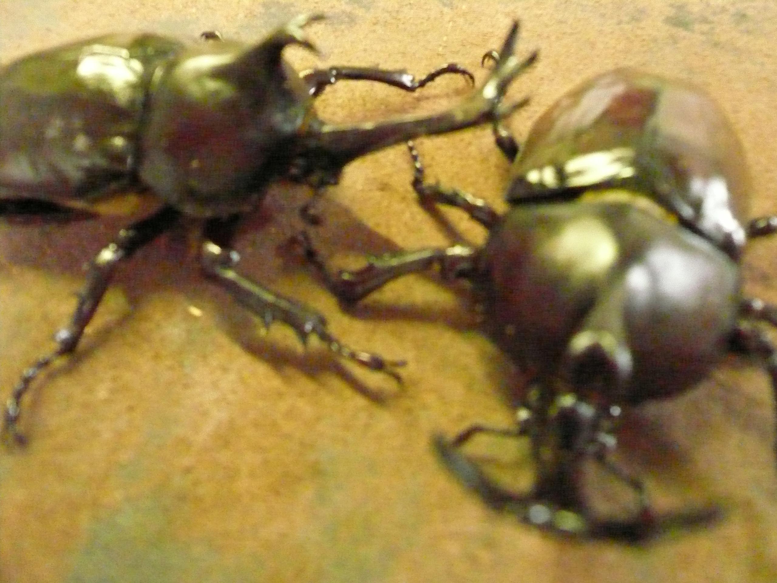 昆虫の聖地中津川 今年も昆虫シーズンの到来です