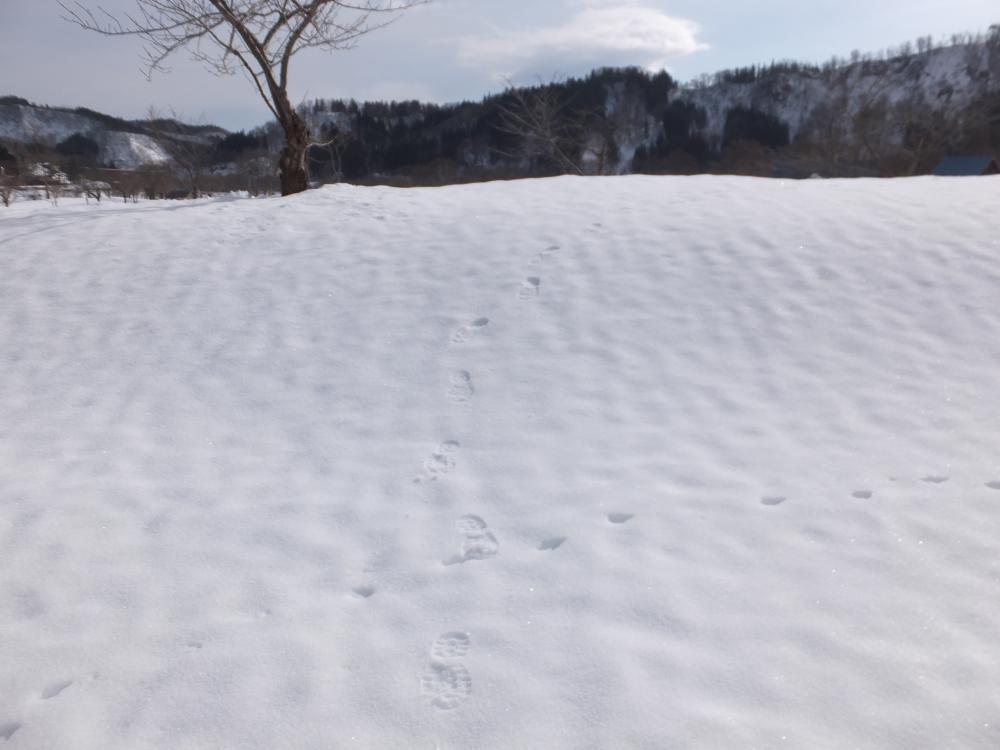 今から 固雪 かよ。 やっぱ 今年の冬も なんか変だぞ。:画像