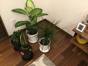 〜観葉植物と文屋農園(写真なし)〜:画像
