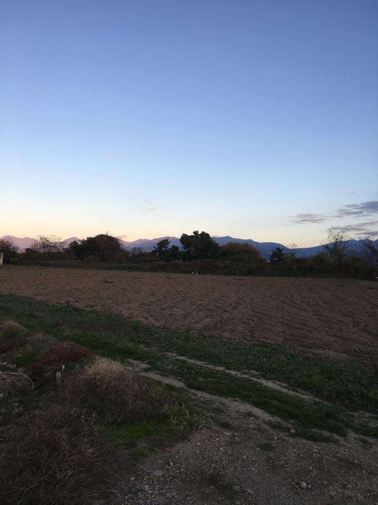 里芋収穫!:画像