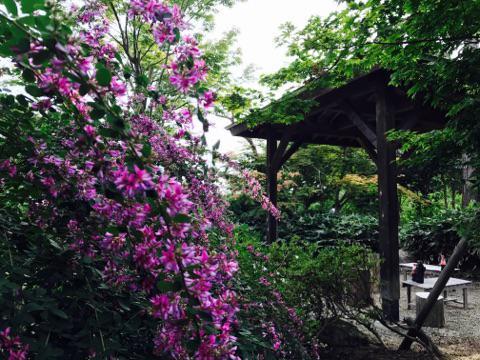 '17 はぎ公園開花状況(9月5日):画像