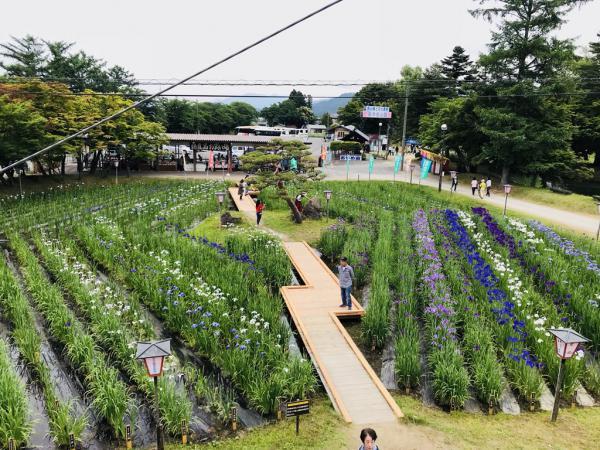 '18あやめ公園開花情報(6月18日):画像
