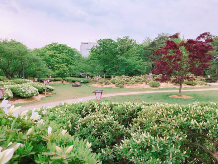 '19つつじ開花状況 (5月14日):画像