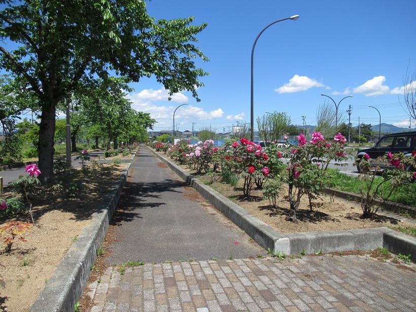 太陽館公園内の『ぼたん園』が見ごろを迎えました☆