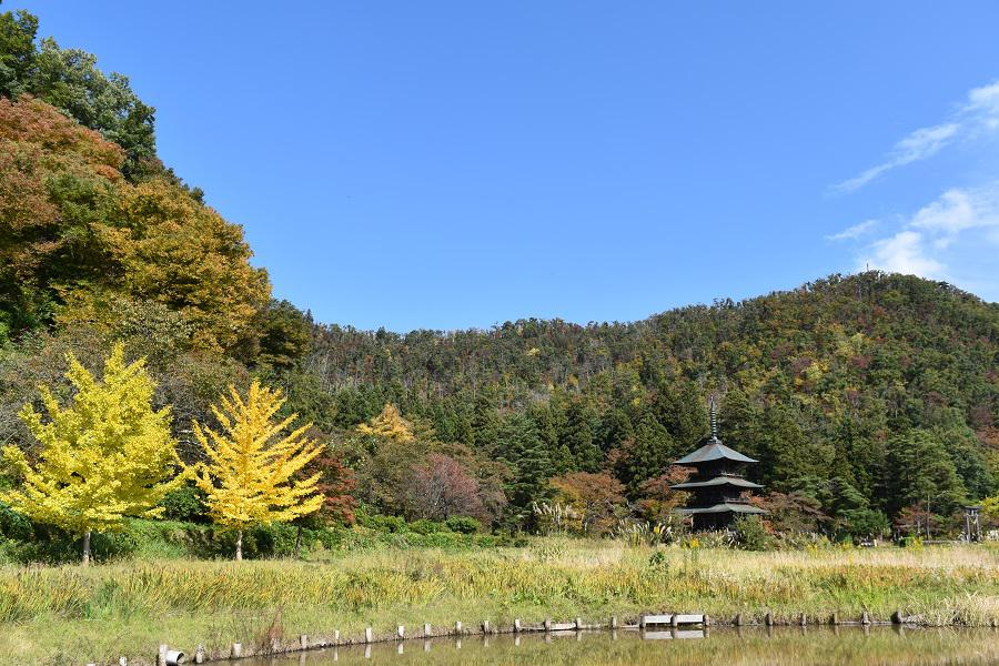 Colored leaves of Akutsu Hachiman Shrine: Image