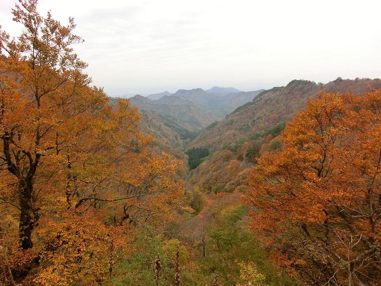 鳩峰峠の紅葉:画像