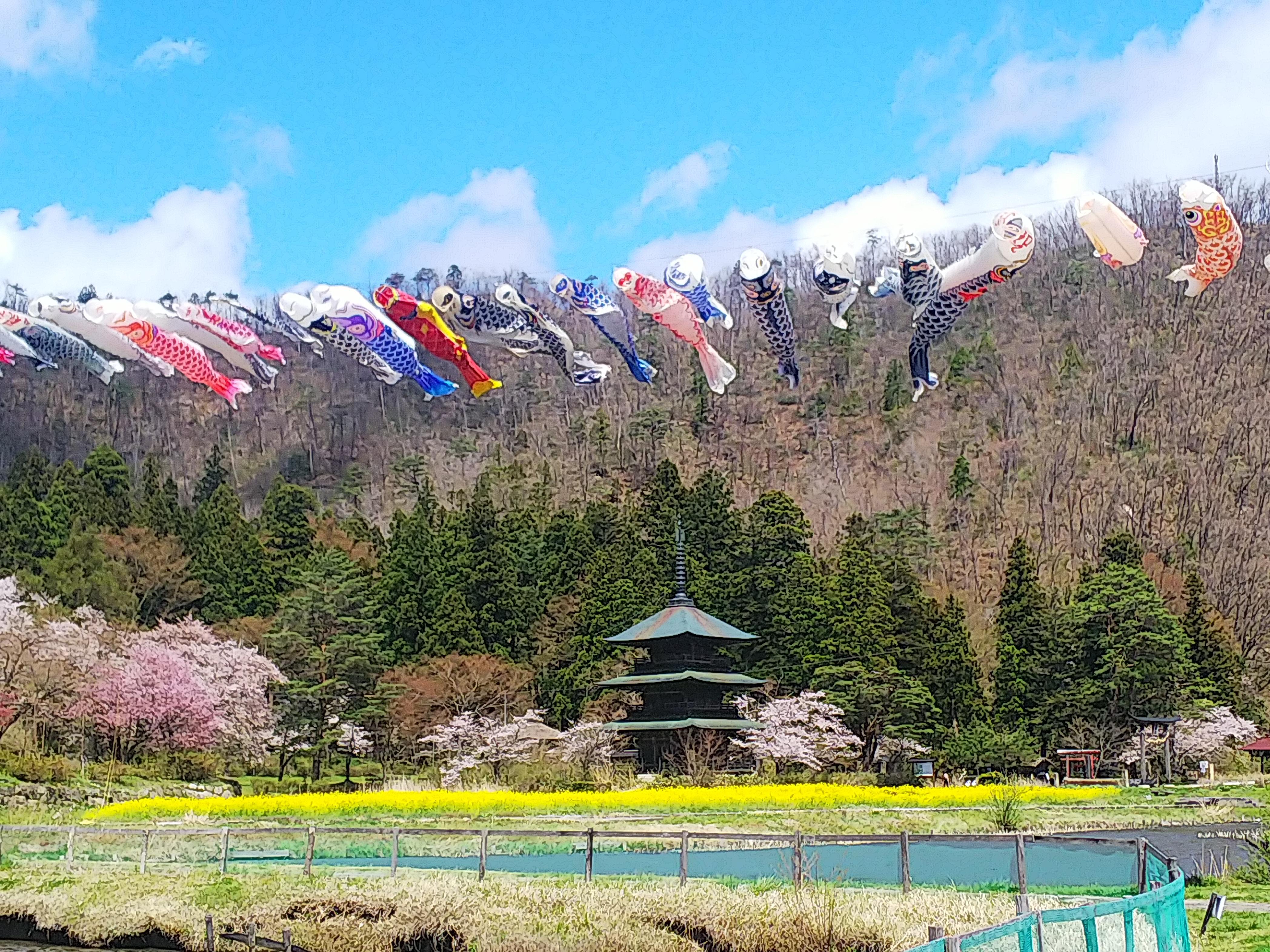 安久津八幡神社(歴史公園)の桜開花情報