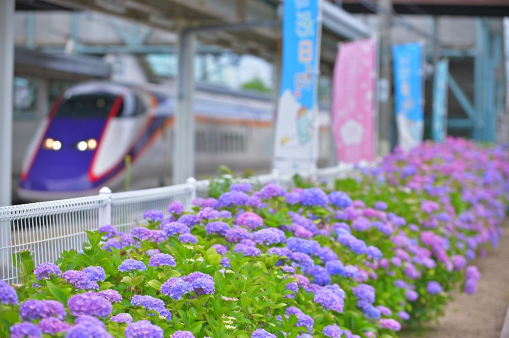 [the first place] Takahata scenery way fotokon summer result announcement! : Image