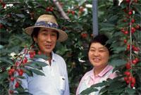 「田中のかじつ」の画像