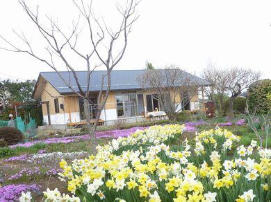 【泉崎Ⅰさんの家】 庭の草花満開