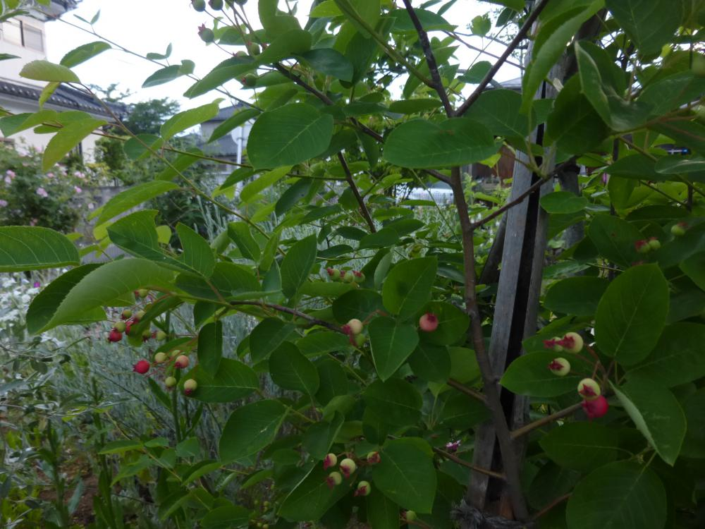 今朝の庭の様子:画像