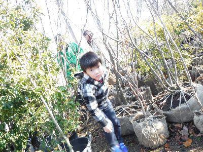 【郡山市安積町・ドミノS邸】 庭づくりに向けて、庭木選びの旅:画像