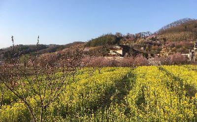 里山日記・・・現場近くのお花スポット:画像