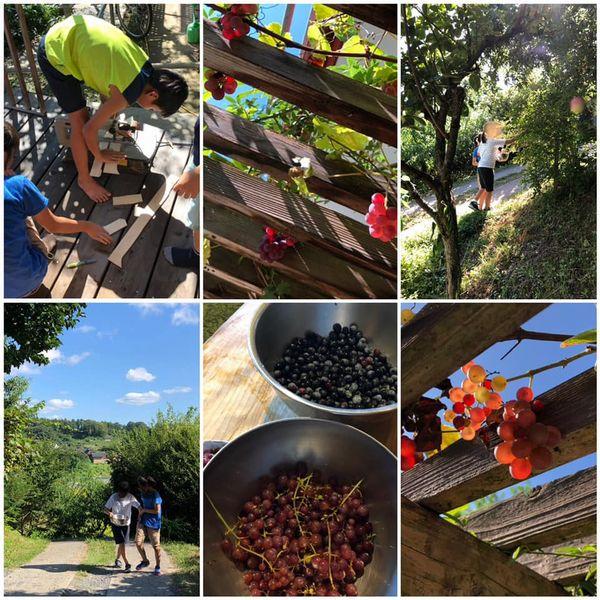 里山日記・・・ブルーベリーとブドウ狩り♪:画像