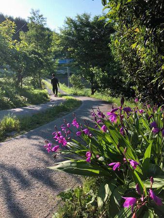 里山日記・・・涼しげな雰囲気の紫蘭が盛りです♪:画像