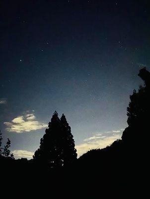 里山日記・・・夜の散歩:画像