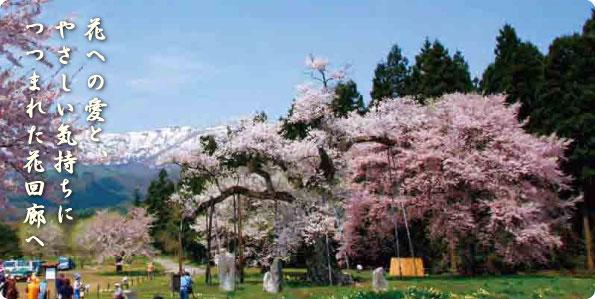☆やまがた花回廊キャンペーン☆:画像