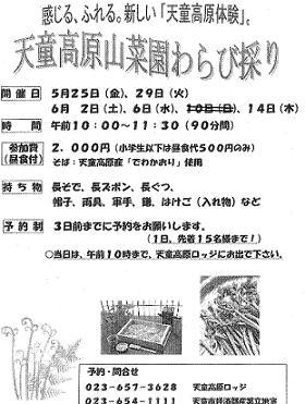 ☆天童高原山菜園わらび採り☆:画像