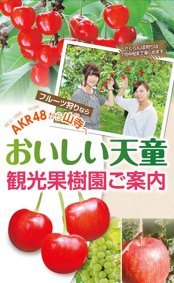 【さくらんぼ】観光果樹園情報:画像