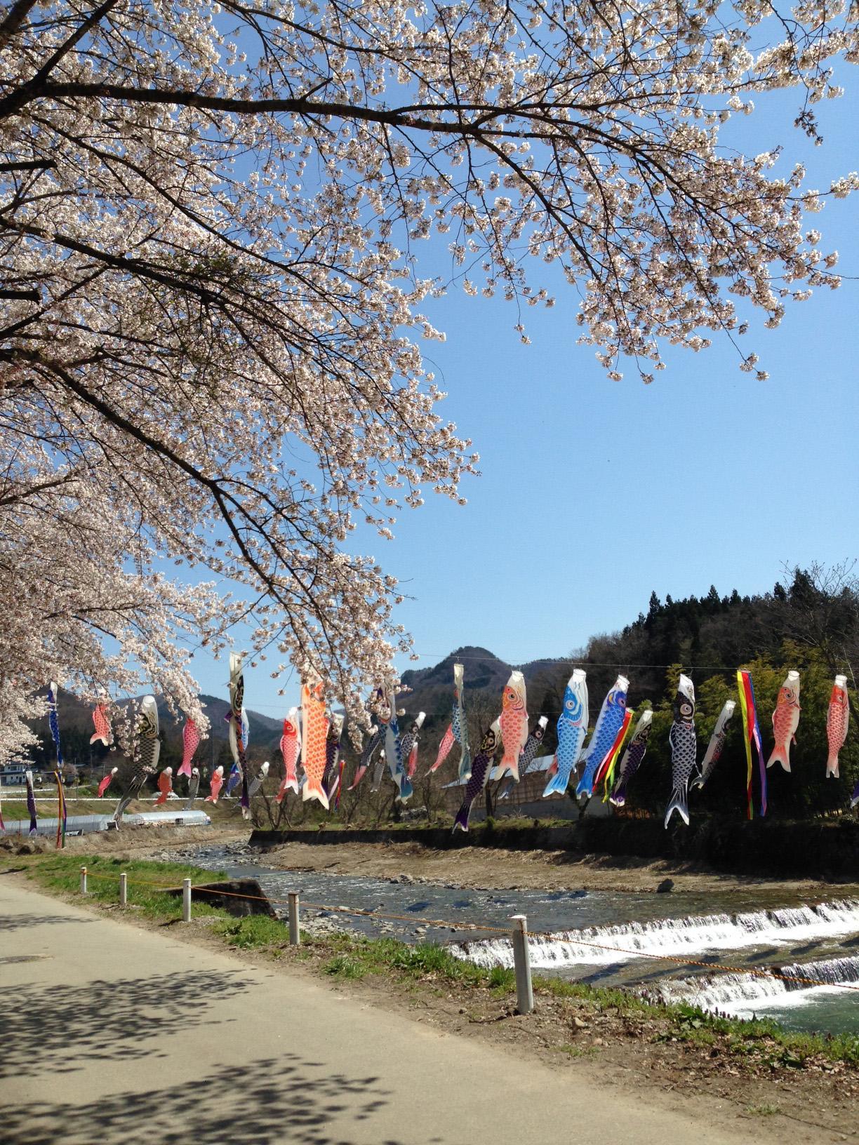 【春・GWのおすすめスポット】高瀬川にかかる鯉のぼり