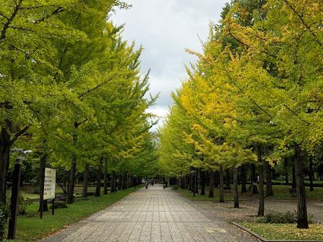 Autumn got closer to Tendo ♪ : Image