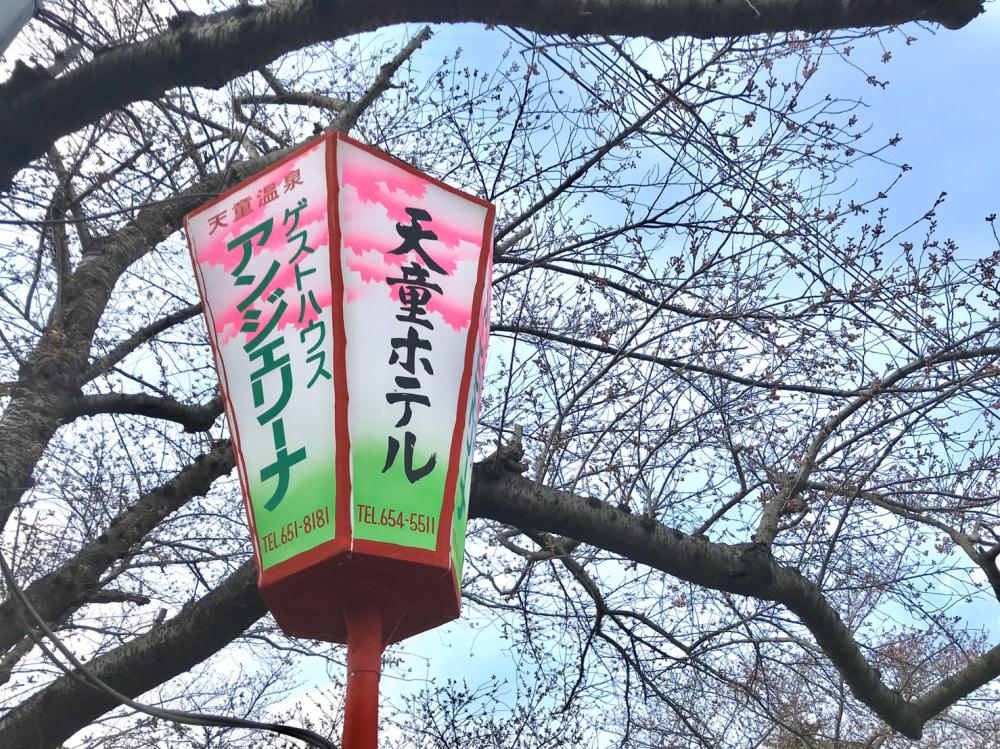 天童桜の名所「舞鶴山」開花予想!:画像