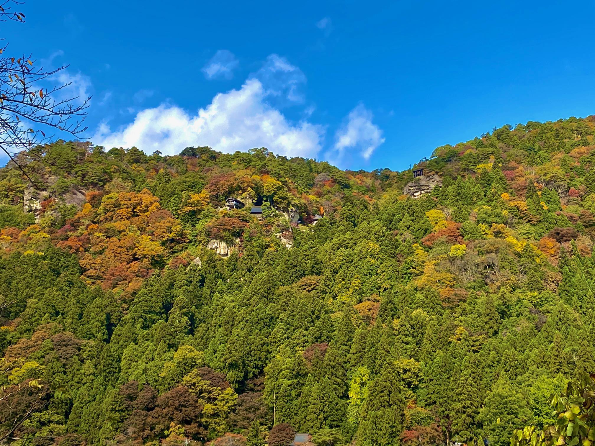 見頃!紅葉とイチョウの木♪