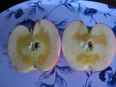 ◆山形・高畠のリンゴは、これだからうまいのだ◆