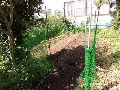 ◆秋野菜 白菜の苗を移植◆