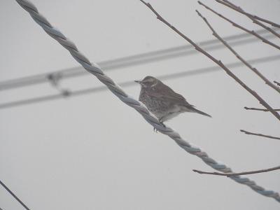 ◆野鳥の来客◆