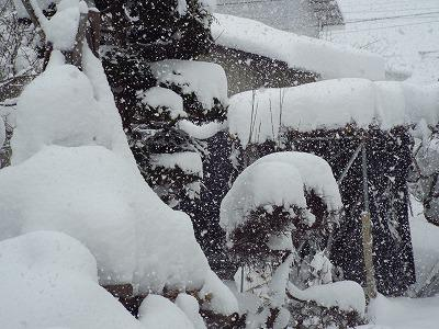 ◆ようやく東北の冬になっかな◆