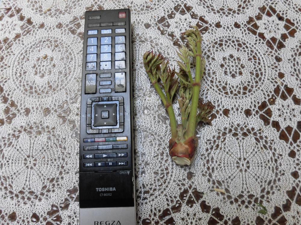 ◆山菜で始めました。◆