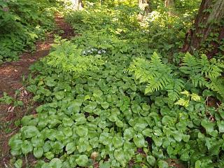 ◆文殊山の植物◆