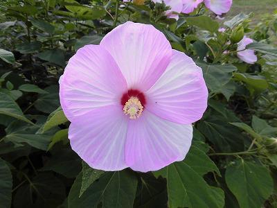 ◆夏の花も満開です。◆