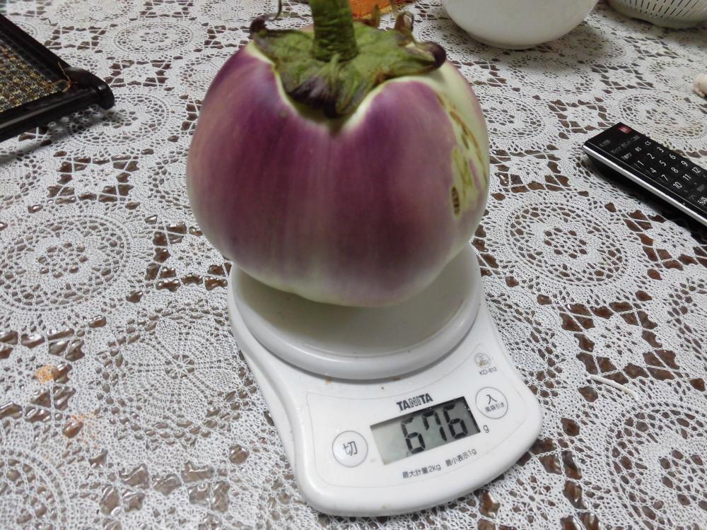 ◆巨大化した茄子◆