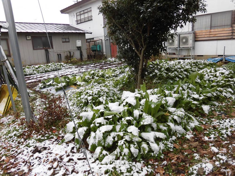 ◆今朝は初積雪を観測しました。 ◆