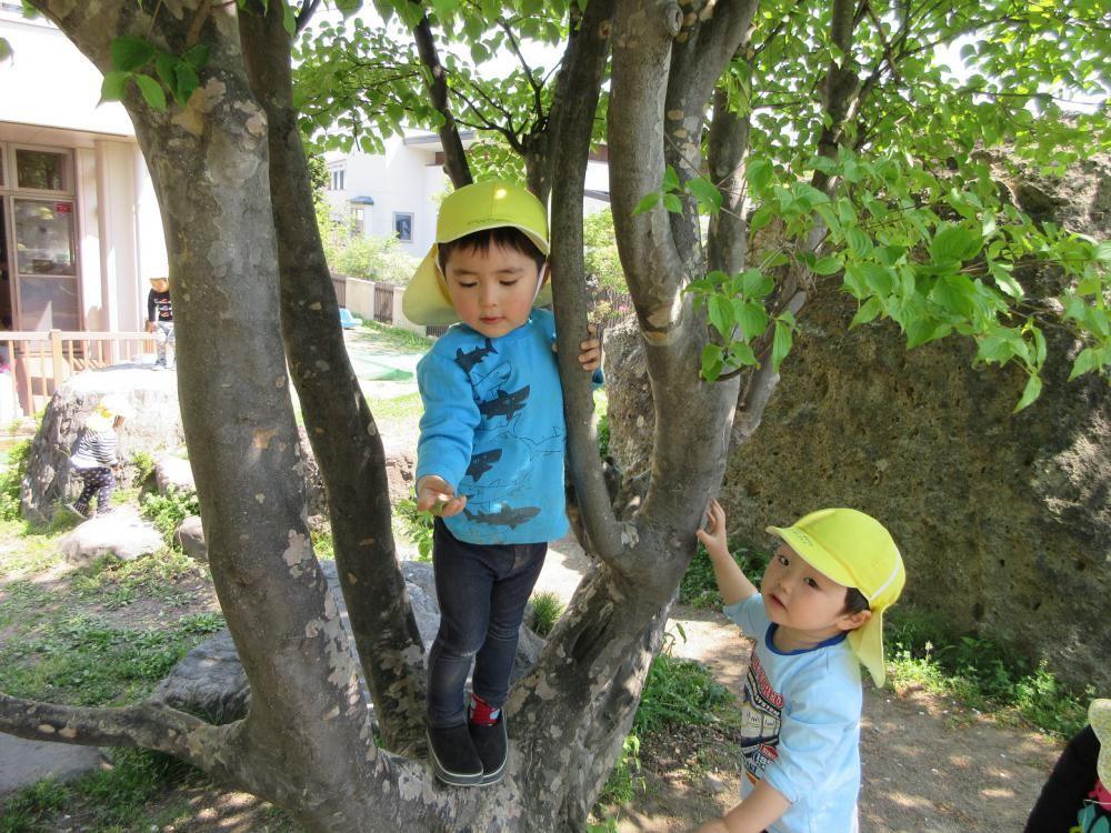 園庭でいろいろな遊びを楽しんでいます。