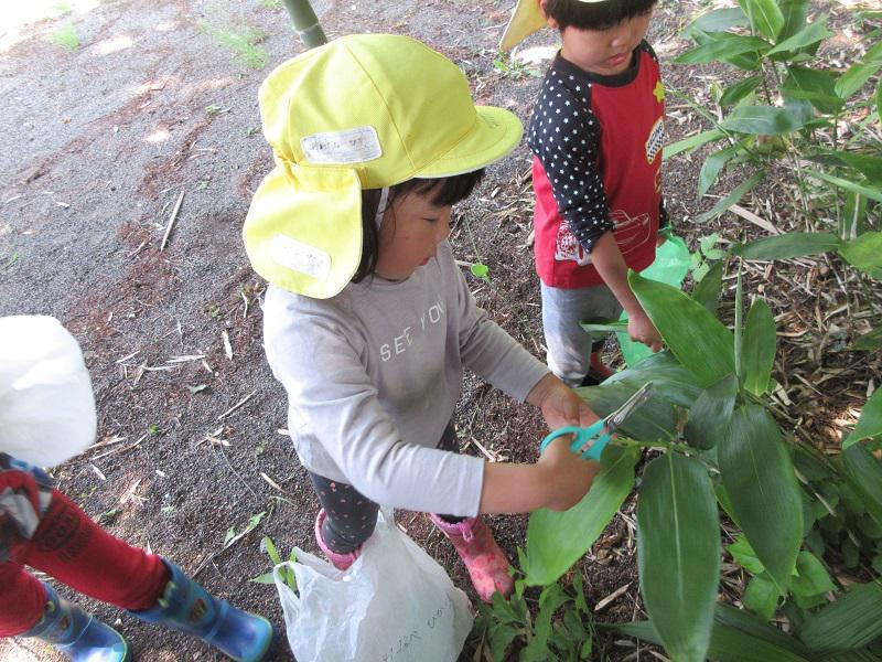笹の葉採りに行ってきました