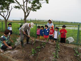 みんなの畑に野菜の苗を植えました!