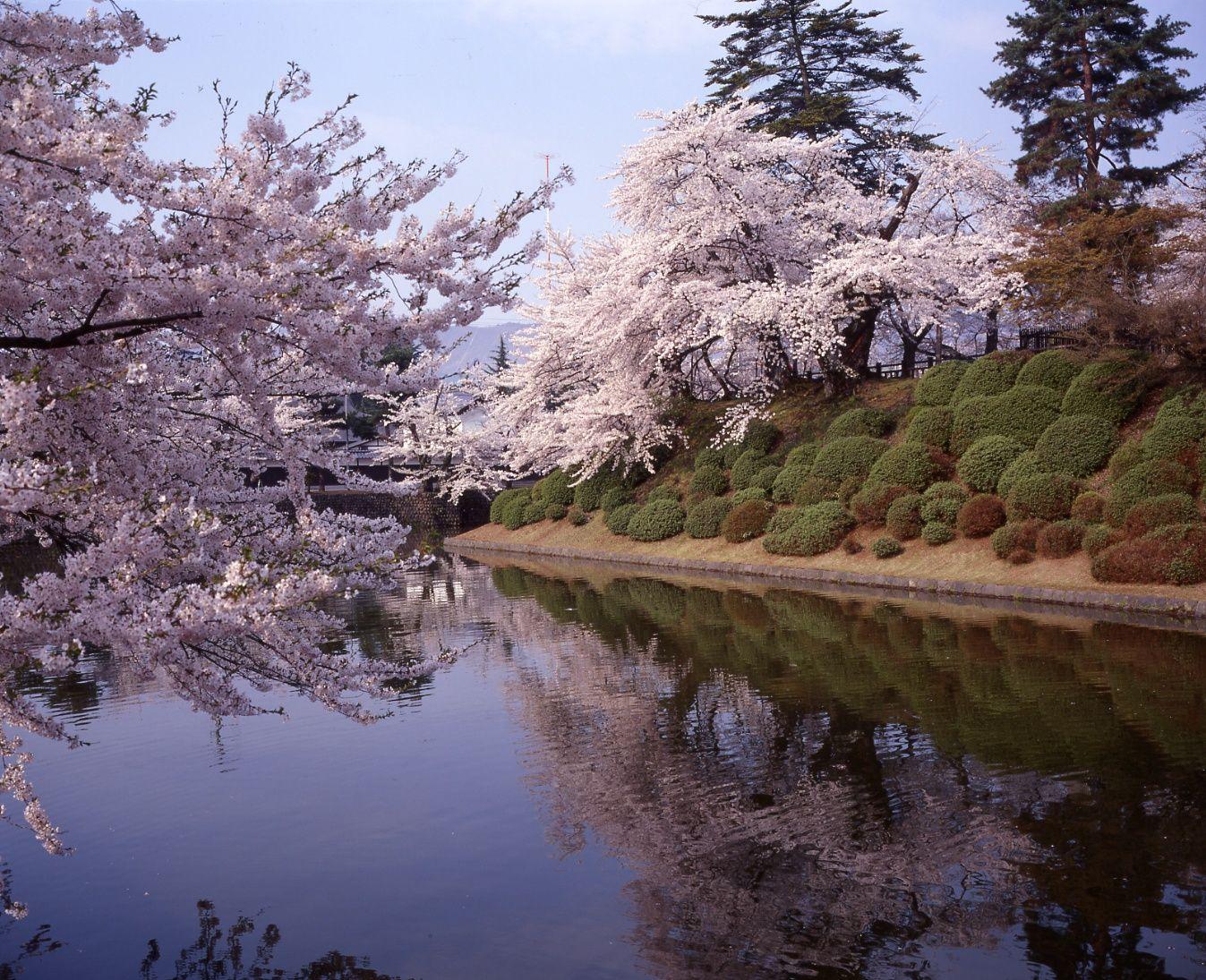 4月29日からの上杉神社・松が岬公園周辺について:画像