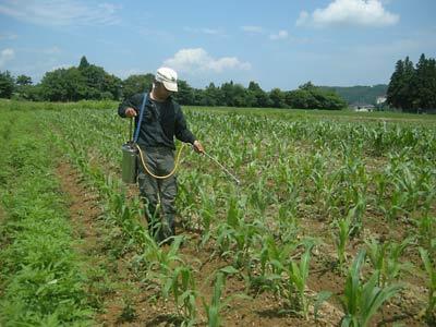 これは農薬の一種ながら、JAS有機栽培にも用いることができる生物農薬。人... もちとうもろこし