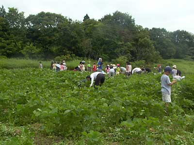 農業体験4