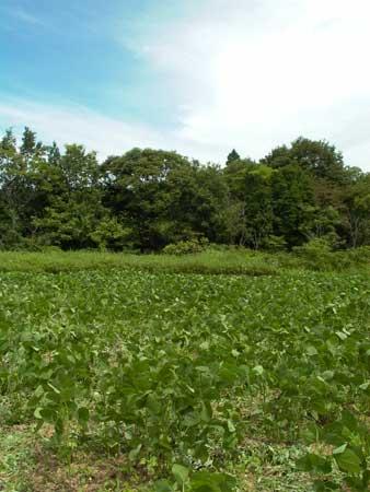 農業体験5