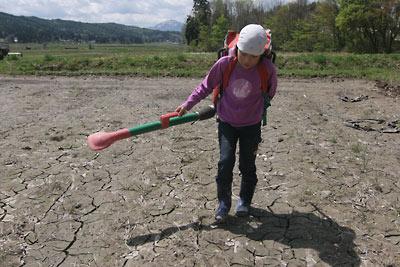 田んぼの肥料撒き