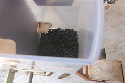 黒豆種まき
