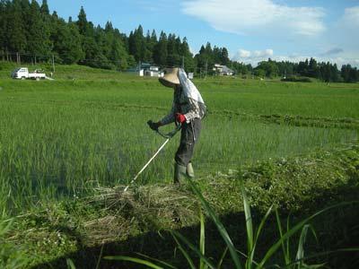 田んぼ草刈りは、20日が締切り