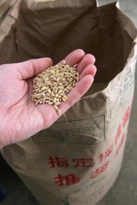 米づくり 2011 種籾準備